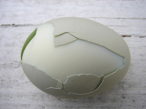 air pocket in egg